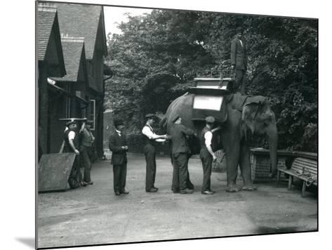 Female Asian Elephant 'Indiarani' Being Fitted with a Saddle-Frederick William Bond-Mounted Photographic Print