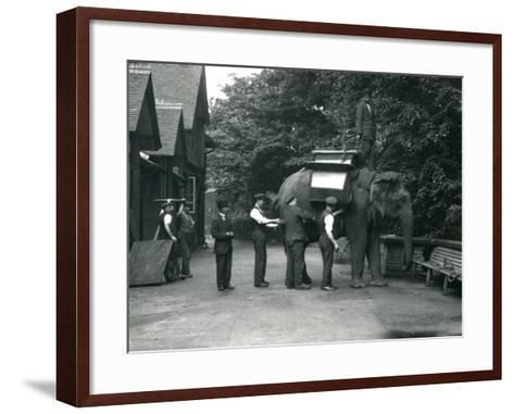 Female Asian Elephant 'Indiarani' Being Fitted with a Saddle-Frederick William Bond-Framed Art Print