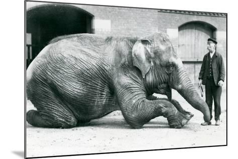 Female Indian Elephant 'Suffa Culli'-Frederick William Bond-Mounted Photographic Print