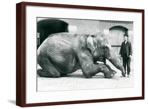 Female Indian Elephant 'Suffa Culli'-Frederick William Bond-Framed Art Print