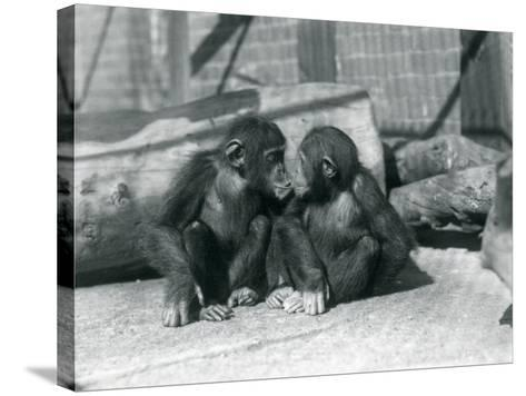 Two Young Chimpanzees, Boo Boo and Bibi, Kiss. London Zoo, September 1927-Frederick William Bond-Stretched Canvas Print