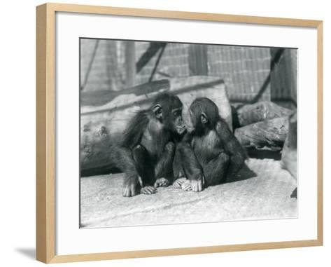 Two Young Chimpanzees, Boo Boo and Bibi, Kiss. London Zoo, September 1927-Frederick William Bond-Framed Art Print