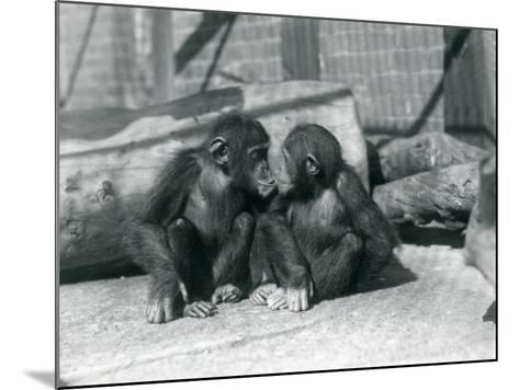 Two Young Chimpanzees, Boo Boo and Bibi, Kiss. London Zoo, September 1927-Frederick William Bond-Mounted Giclee Print