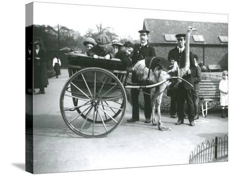 An Ostrich Cart Ride with Children and Keepers George Blore and William Dexter at London Zoo-Frederick William Bond-Stretched Canvas Print