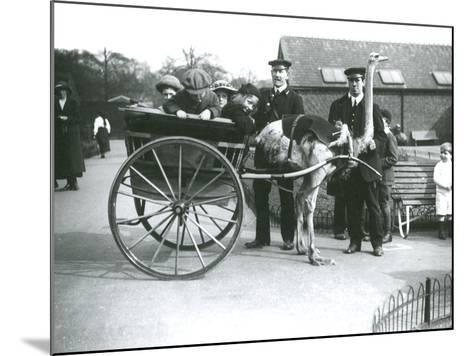 An Ostrich Cart Ride with Children and Keepers George Blore and William Dexter at London Zoo-Frederick William Bond-Mounted Photographic Print