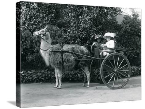 Three Visitors, Including Two Young Girls, Riding in a Cart Pulled by a Llama, London Zoo, C.1912-Frederick William Bond-Stretched Canvas Print