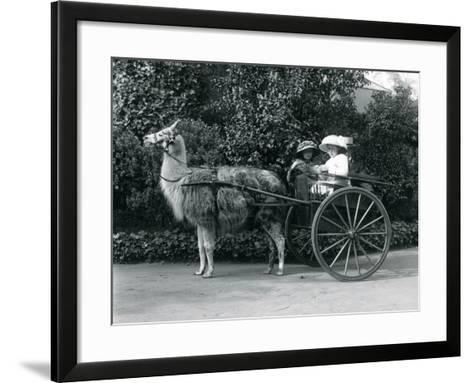 Three Visitors, Including Two Young Girls, Riding in a Cart Pulled by a Llama, London Zoo, C.1912-Frederick William Bond-Framed Art Print