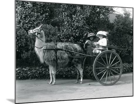 Three Visitors, Including Two Young Girls, Riding in a Cart Pulled by a Llama, London Zoo, C.1912-Frederick William Bond-Mounted Photographic Print