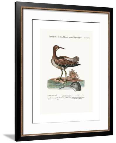 The Whimbrel, or Lesser Curlew, and the Paper-Moss, 1749-73-George Edwards-Framed Art Print