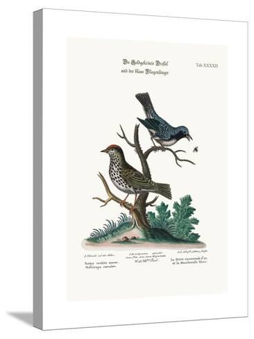 The Golden-Crowned Thrush and the Blue Flycatcher, 1749-73-George Edwards-Stretched Canvas Print
