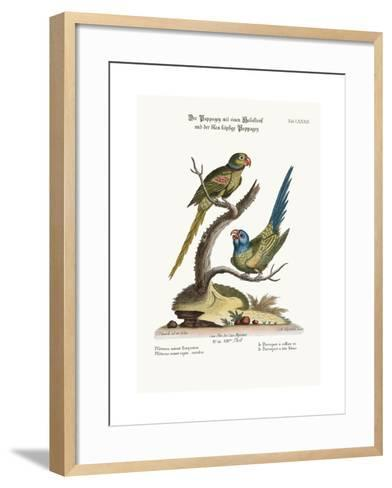The Ring Parrakeet, and the Blue-Headed Parrakeet, 1749-73-George Edwards-Framed Art Print