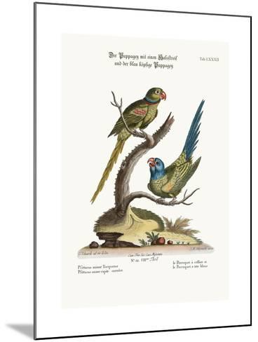 The Ring Parrakeet, and the Blue-Headed Parrakeet, 1749-73-George Edwards-Mounted Giclee Print