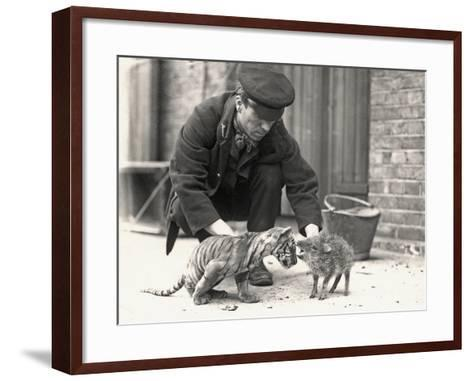 Keeper, H. Warwick, with a Tiger Cub and a Peccary, Taken at Zsl London Zoo, May 1914-Frederick William Bond-Framed Art Print