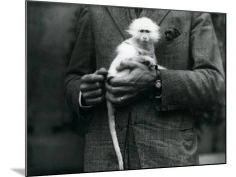 An Albino Old World Monkey, Genus Ceropithecus, Being Held at London Zoo, July 1922-Frederick William Bond-Mounted Photographic Print