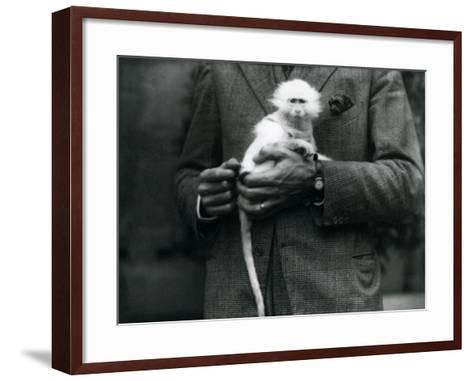 An Albino Old World Monkey, Genus Ceropithecus, Being Held at London Zoo, July 1922-Frederick William Bond-Framed Art Print
