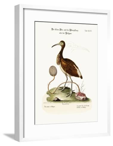 The Lesser Ibis, and the Animal-Plant or Polype, 1749-73-George Edwards-Framed Art Print