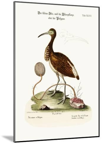 The Lesser Ibis, and the Animal-Plant or Polype, 1749-73-George Edwards-Mounted Giclee Print