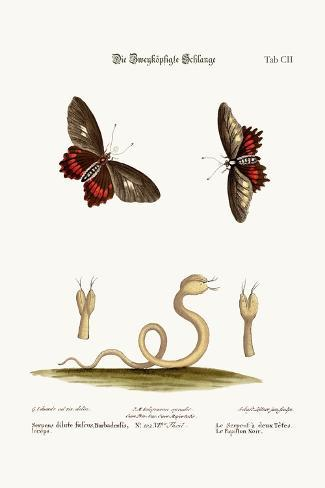 The Double-Headed Snake. the Black Butterflies, 1749-73-George Edwards-Stretched Canvas Print