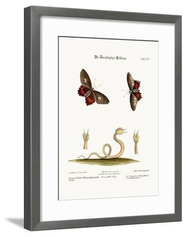 The Double-Headed Snake. the Black Butterflies, 1749-73-George Edwards-Framed Art Print