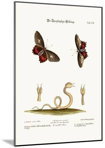 The Double-Headed Snake. the Black Butterflies, 1749-73-George Edwards-Mounted Giclee Print