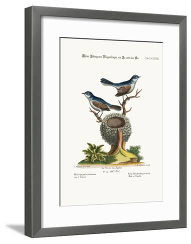 The Little Blue-Grey Flycatchers, Cock and Hen, 1749-73-George Edwards-Framed Art Print