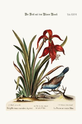 The Blue-Bellied Finch. the Narcissus Jacobea, 1749-73-George Edwards-Stretched Canvas Print