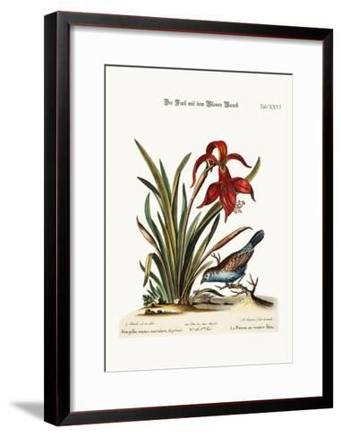 The Blue-Bellied Finch. the Narcissus Jacobea, 1749-73-George Edwards-Framed Art Print