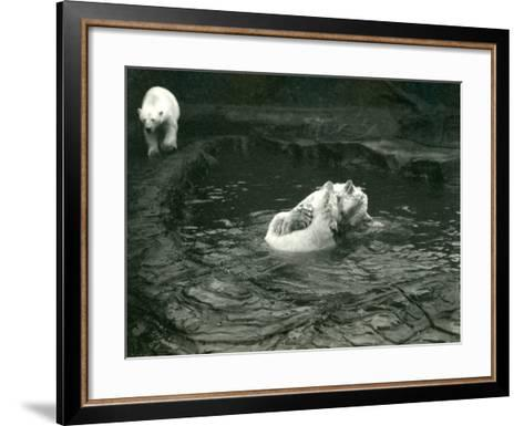 Two Polar Bears Romp in their Pool While Another Walks By, London Zoo, June 1922-Frederick William Bond-Framed Art Print