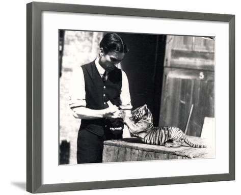 Tiger Cub Being Fed by Keeper Harry Warwick, 1914-Frederick William Bond-Framed Art Print