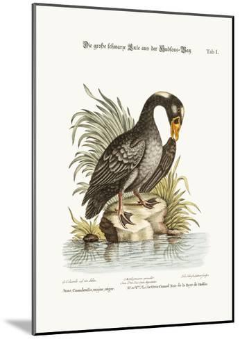 The Great Black Duck from Hudson's Bay, 1749-73-George Edwards-Mounted Giclee Print