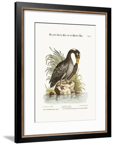 The Great Black Duck from Hudson's Bay, 1749-73-George Edwards-Framed Art Print
