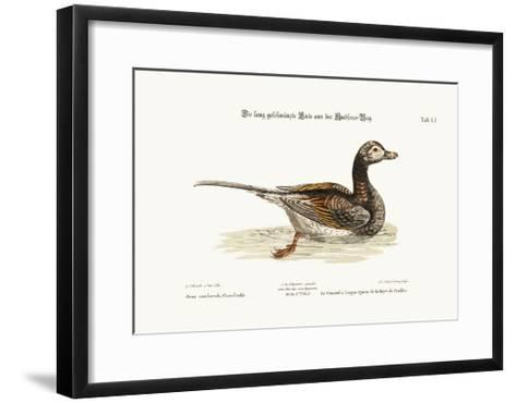 The Long-Tailed Duck from Hudson's Bay, 1749-73-George Edwards-Framed Art Print