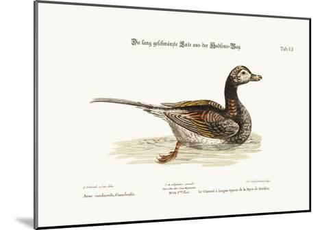 The Long-Tailed Duck from Hudson's Bay, 1749-73-George Edwards-Mounted Giclee Print