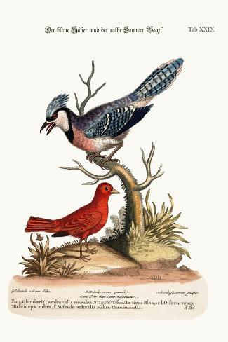 The Blue Jay, and the Summer Red-Bird, 1749-73-George Edwards-Stretched Canvas Print