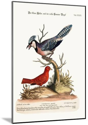 The Blue Jay, and the Summer Red-Bird, 1749-73-George Edwards-Mounted Giclee Print