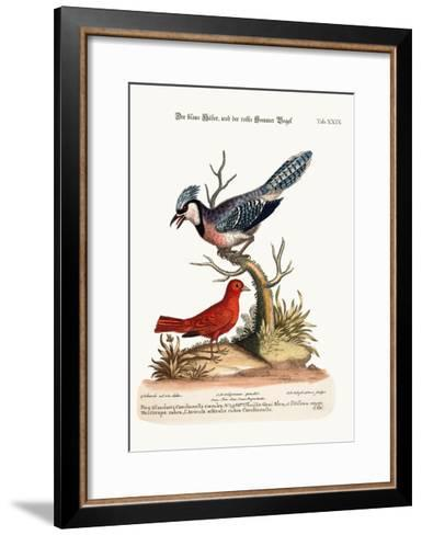 The Blue Jay, and the Summer Red-Bird, 1749-73-George Edwards-Framed Art Print