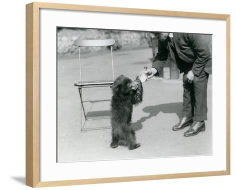 Keeper Harry Warwick Bottle Feeds a Sloth Bear Cub at London Zoo, August 1921-Frederick William Bond-Framed Art Print