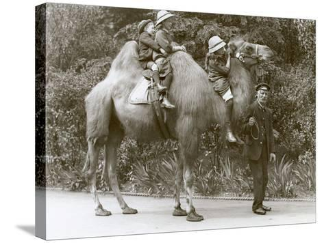 A Bactrian Camel Ride with Keeper and Three Children at London Zoo, May 1914-Frederick William Bond-Stretched Canvas Print