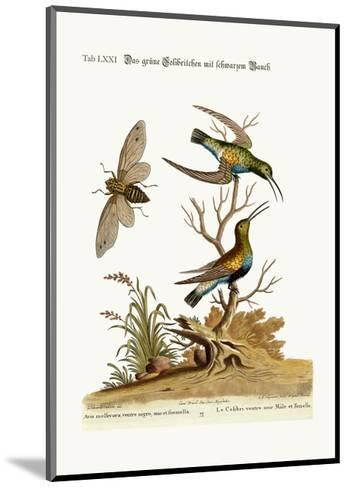 The Black-Bellied Green Hummingbird, 1749-73-George Edwards-Mounted Giclee Print