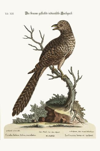 The Brown and Spotted Indian Cuckow, 1749-73-George Edwards-Stretched Canvas Print