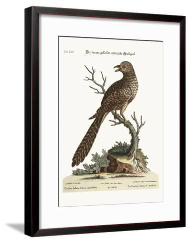 The Brown and Spotted Indian Cuckow, 1749-73-George Edwards-Framed Art Print