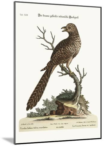 The Brown and Spotted Indian Cuckow, 1749-73-George Edwards-Mounted Giclee Print