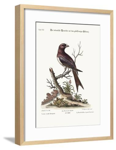 The Fork-Tailed Indian Butcher-Bird, 1749-73-George Edwards-Framed Art Print