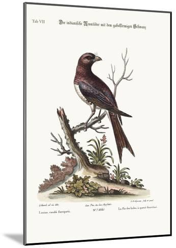The Fork-Tailed Indian Butcher-Bird, 1749-73-George Edwards-Mounted Giclee Print