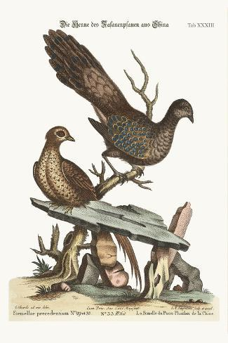 The Hen Peacock Pheasant from China, 1749-73-George Edwards-Stretched Canvas Print