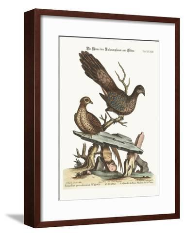 The Hen Peacock Pheasant from China, 1749-73-George Edwards-Framed Art Print