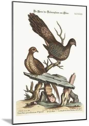 The Hen Peacock Pheasant from China, 1749-73-George Edwards-Mounted Giclee Print