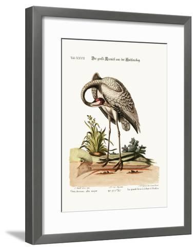 The Hooping-Crane from Hudson's Bay, 1749-73-George Edwards-Framed Art Print