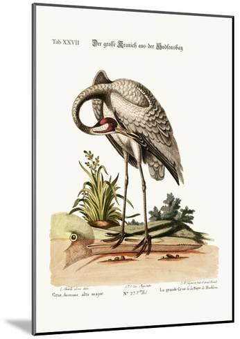 The Hooping-Crane from Hudson's Bay, 1749-73-George Edwards-Mounted Giclee Print