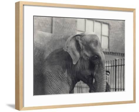 Asian Elephant with Keeper, London Zoo, 1914-Frederick William Bond-Framed Art Print